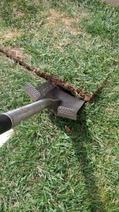 dig out carefully in full pieces, keeps ground level and grass can be re-used